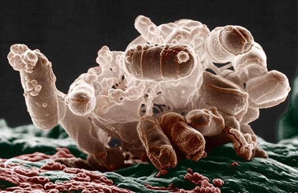Mikrob Ešerihija koli milionima godina koristi CRISPR kao oružje u borbi protiv virusa