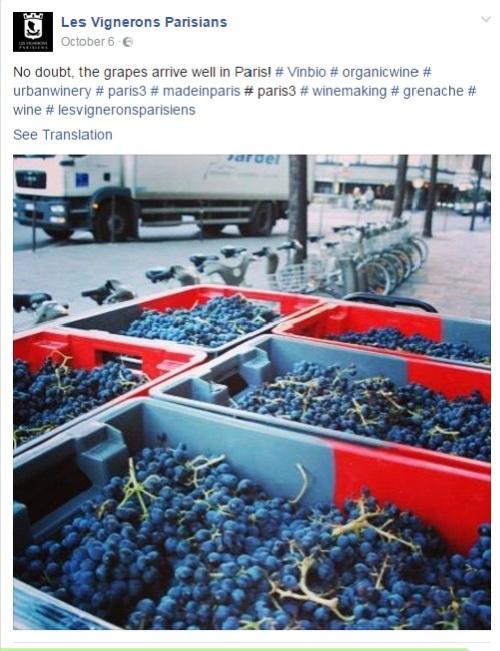 Pločnici pariskih ulica: poprište proizvodnje vina u Les Vignerons Parisians