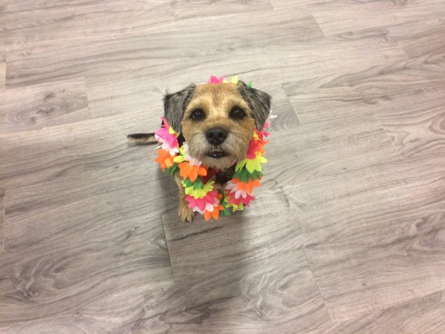 Charlene @tartanmouth · Jan 20 Distracting myself from global politics by dressing up the office dog.