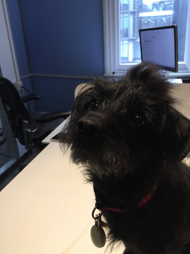 Sara Stewart ‏@twowitwowoo Jan 26 Delighted to meet Mitzy, the office dog, plus lovely meeting with @WantDontWant