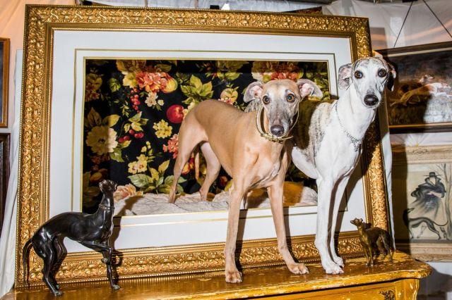 """Vipeti tokom godišnjeg susreta odgajivača """"Meet the Breed"""", ulaz u njujorški klub Vestminster Kenel gde je 11. februara održan 141. Sajam pasa (David Williams/Bloomberg)"""