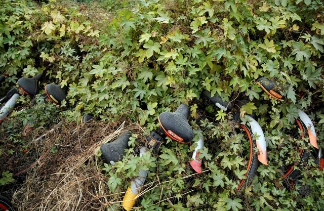 16. Napušteni bicikli najrazličitijih servisa za iznajmljivanje bicikala, zarasli u poljani kraj Šangaja (3. nov 2017, Aly Song/ Rojters)