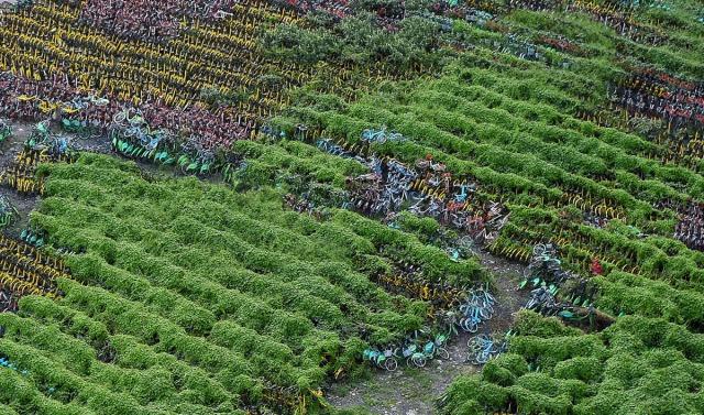 29. Priroda počinje da se vraća, dok trava osvaja mesto na kojem leže napušteni bicikli, ostavljeni na improvizovanom parkingu u Šangaju (24. avg 2017, Chandan Khanna/ AFP/ Getty)