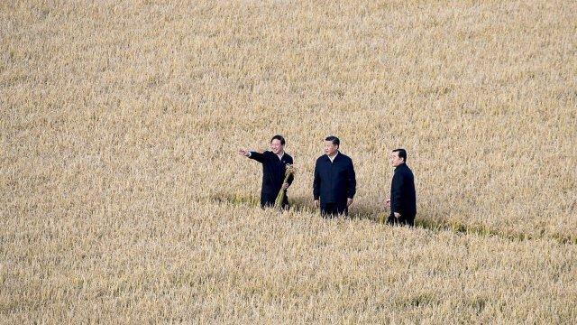 Kineski predsednik Si Đinping (u sredini) na farmi u provinciji Hejlongđjang na severoistoku Kine (AP)
