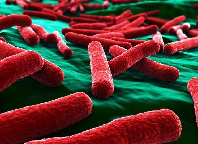 Bakterija Ešerihija koli, za koju se donedavno mislilo da nije nije nikakva nepoznanica